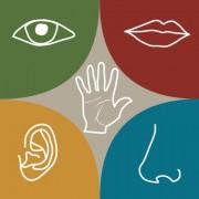 Sensory-Processing-Disorder