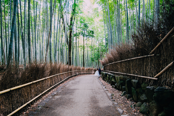 Japan-7-Bamboo-forest