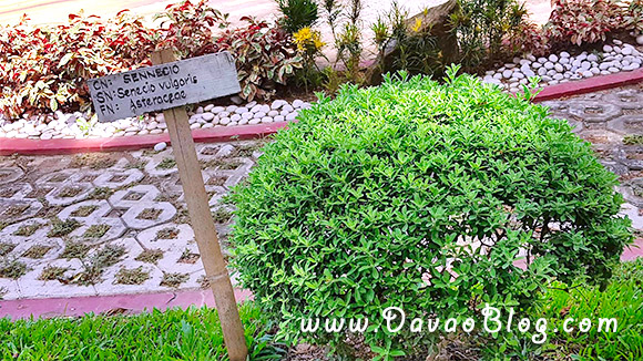 Botanical-Garden-Marfori-Heights-Davao-City-4