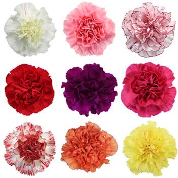 Flower Sales – beginning Feb 10