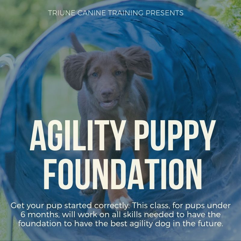 Agility Training for Puppy at Triune Canine