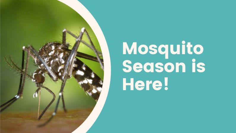 Mosquito Season is Here!