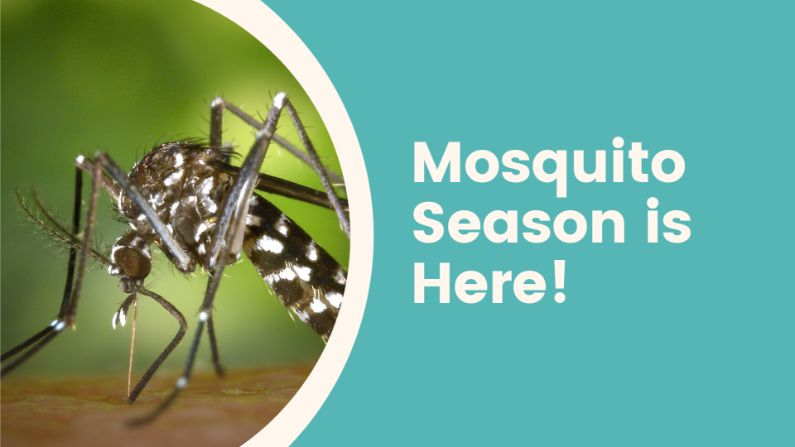 Mosquito Season is Here!