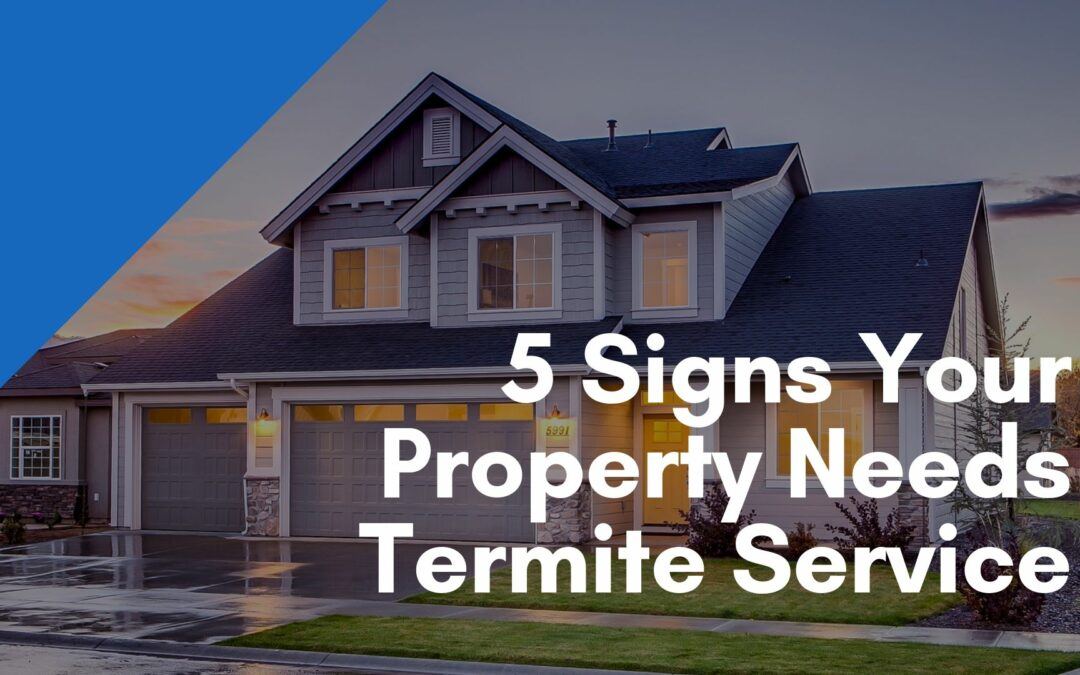 5 Signs Your Property Needs Termite Service