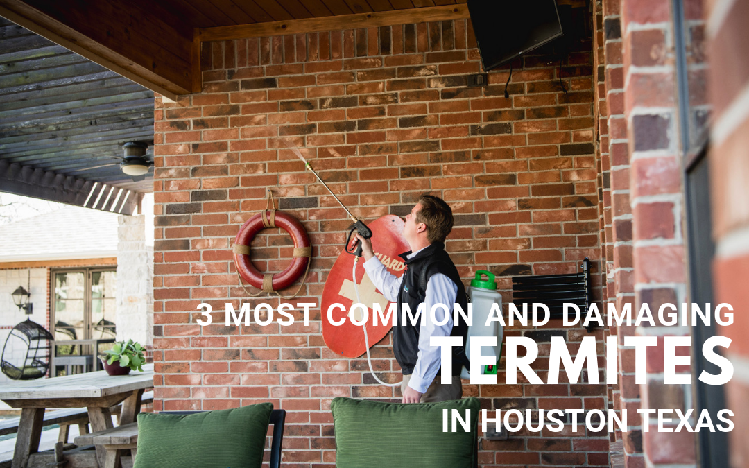 3 Most Common and Damaging Termites in Houston Texas