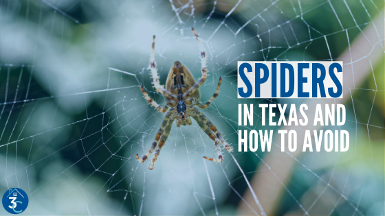 Spider Control in Texas: Getting Rid of and Avoiding 8-Legged Infestations