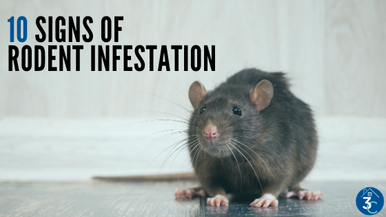 10 Signs of a Rodent Infestation