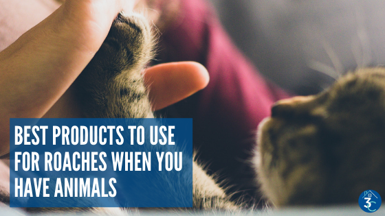 Pet Safe Pest Control: 5 Household Roach Products
