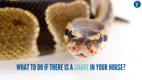 There's a Snake in My House! How to Remove Wild Snakes from Your Home Safely