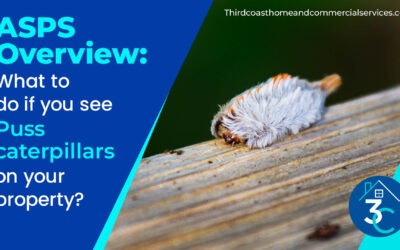 ASPS Overview: What to do if you see puss caterpillars on your property?