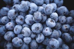 pixabay blueberries