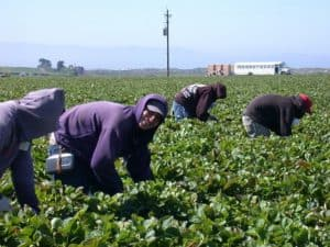 pixabay farm labor