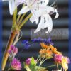 Crinum 'Marisco' and other flowers picked on Oct. 30
