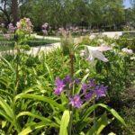 Colonial-Lake-Park-Charleston-IMG_8453-e1498226957567-scaled-1.jpg