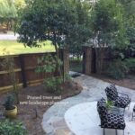 courtyard-renovation-pruned-trees-and-plantings-scaled-1.jpg