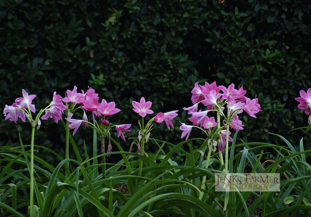 And formal, contemporary gardens…