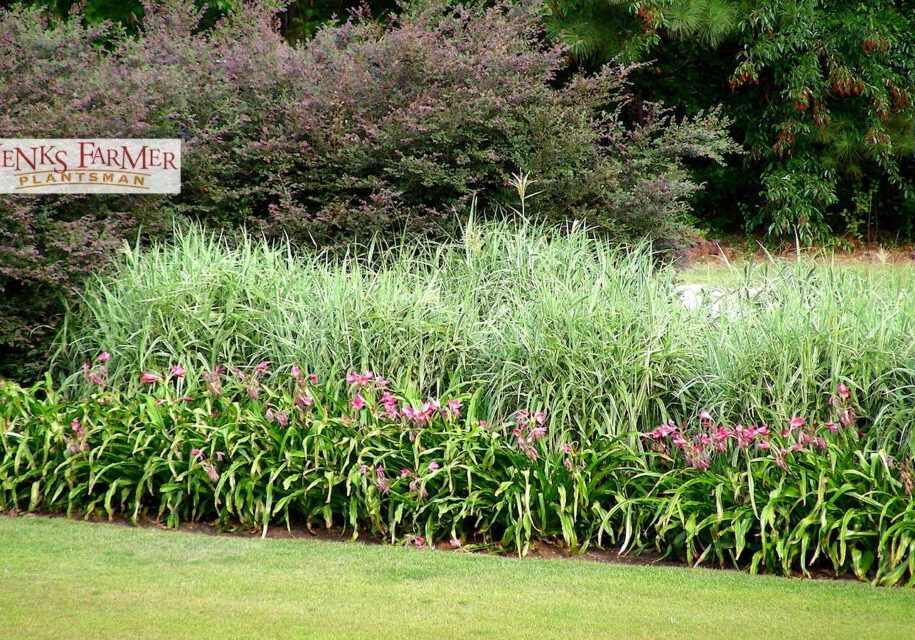 From highway medium plantings…