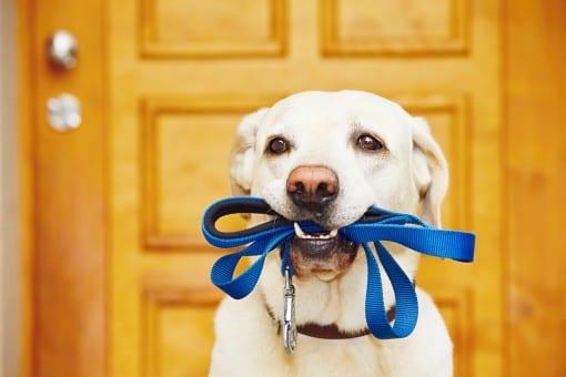 Service Dog Rules