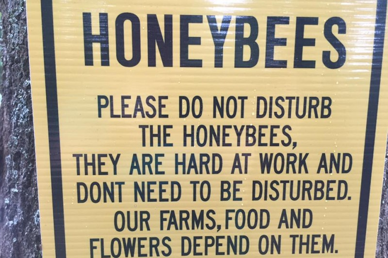 flowertown bee farm