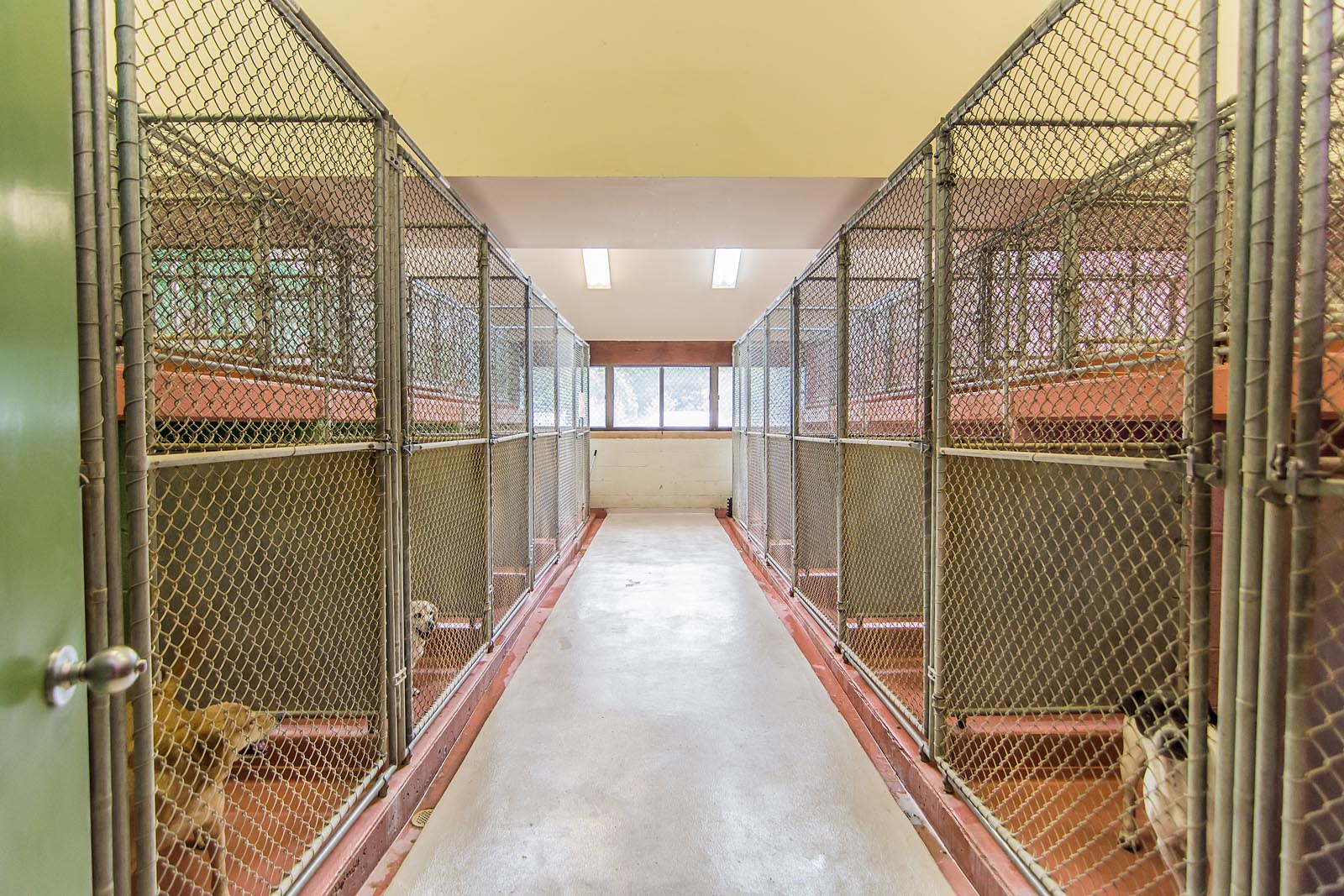 Back of Kennel Runs at The Animal Hospital of Roxbury