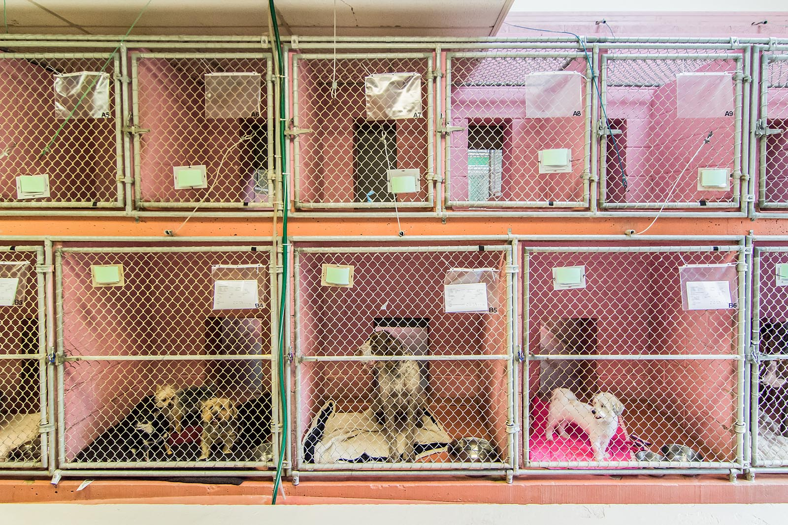 Front of Kennel Run at The Animal Hospital of Roxbury