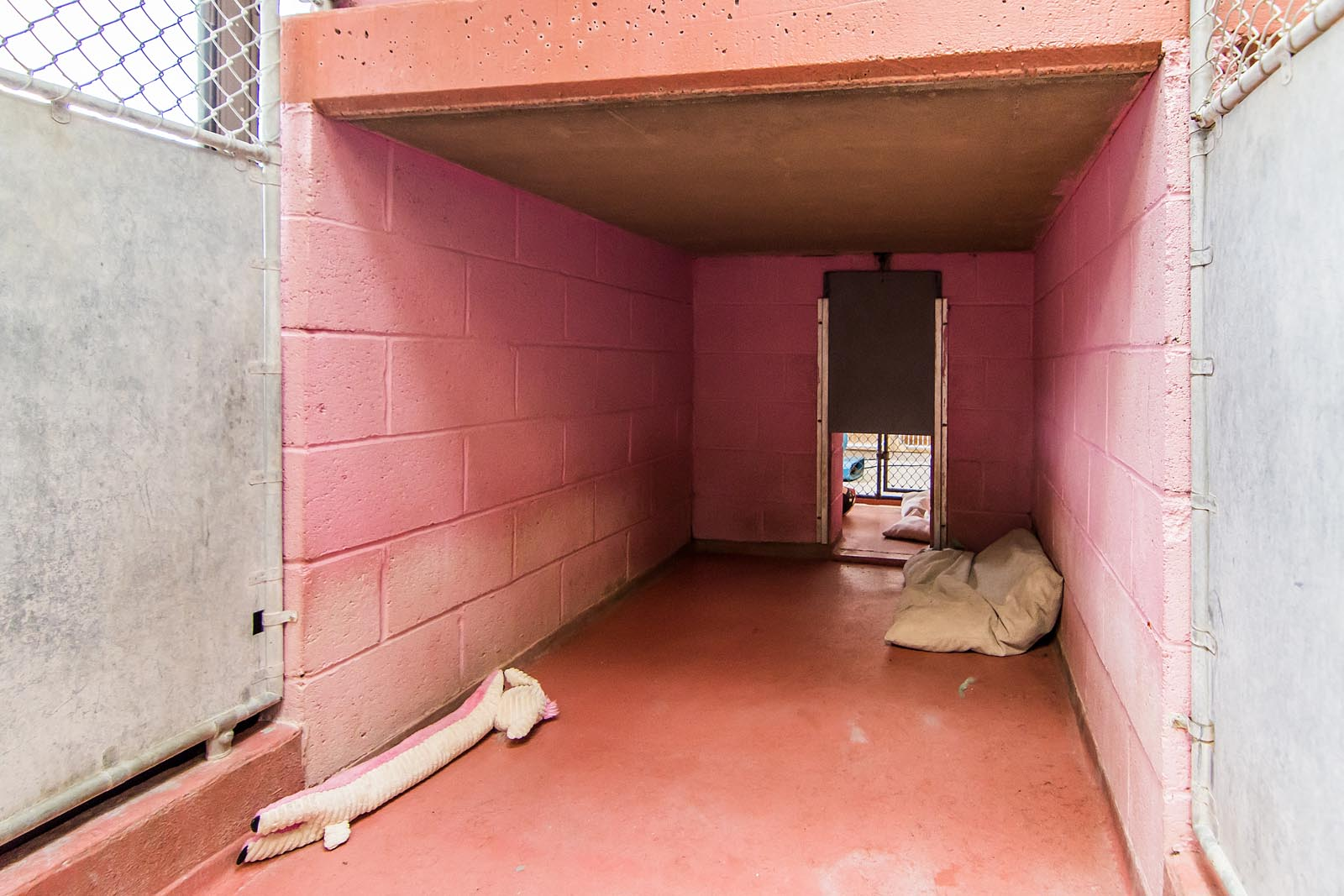 Back of Kennel Run at The Animal Hospital of Roxbury