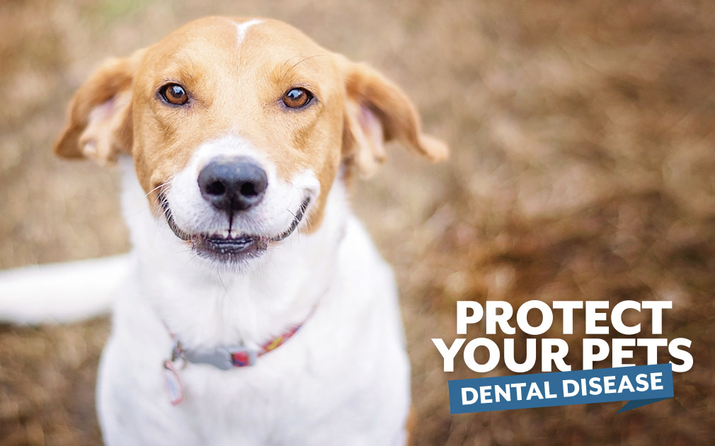 Protect Your Pets Against Dental Disease