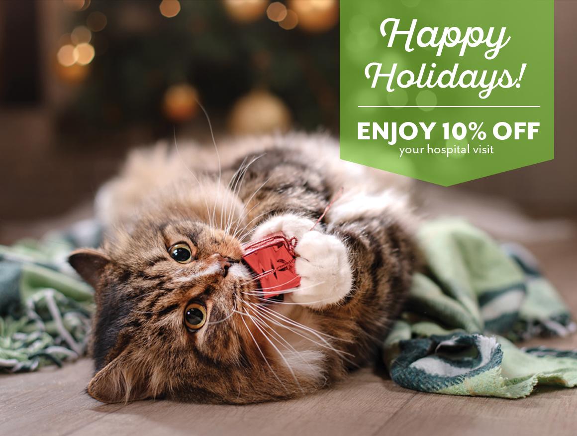 Protect Your Pets, Feline Wellness Exam