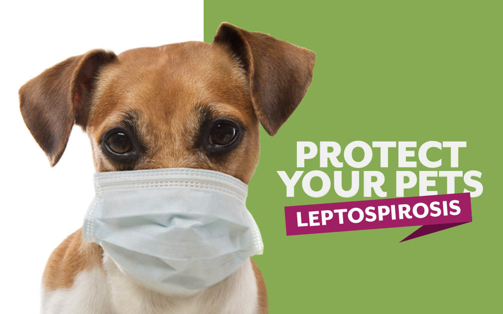 Protect Your Pets Against Leptospirosis