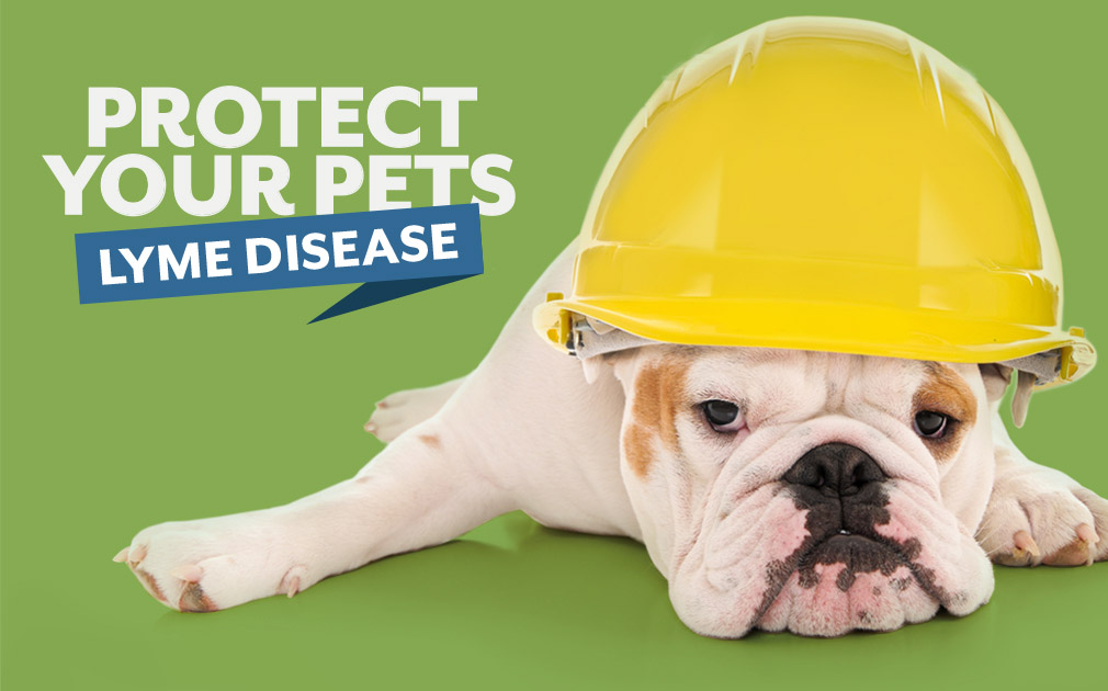 Protect Your Pets Against Lyme Disease