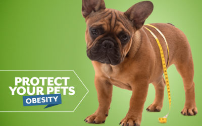 Protect Your Pets from Obesity