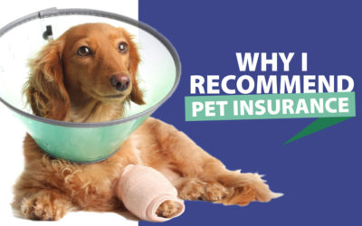 Why I Highly Recommend Pet Insurance