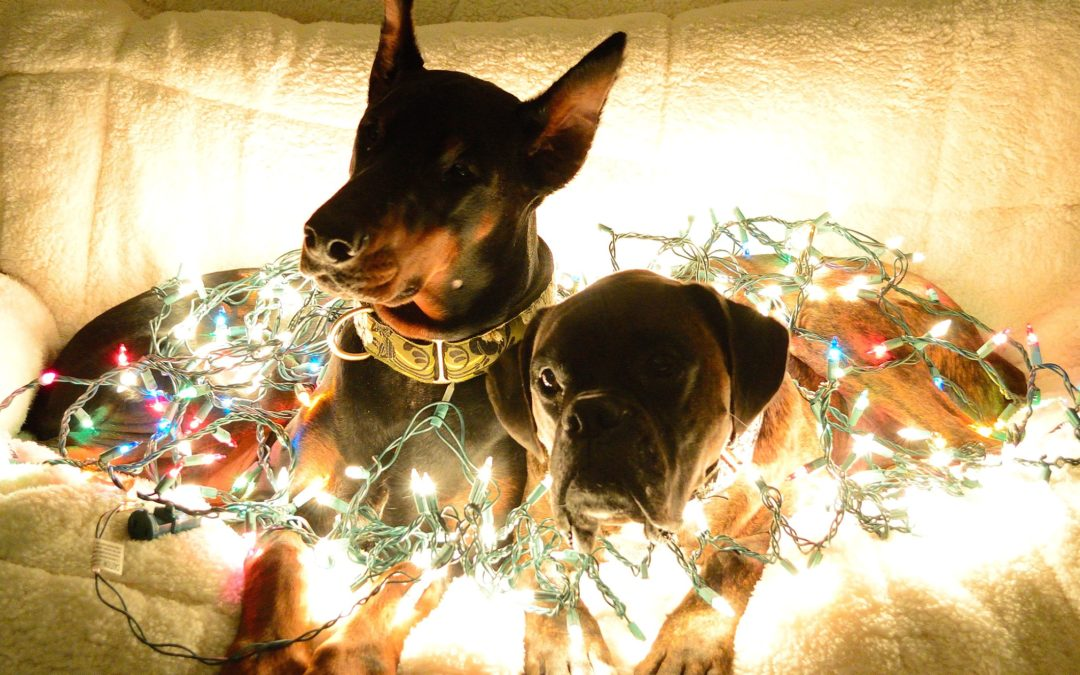 Holidays Pet Safety Tips