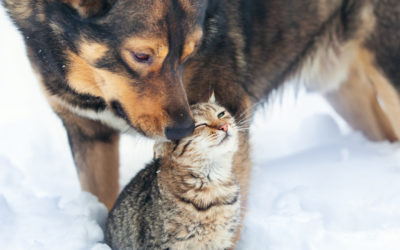 Tips for Weathering the Cold with Your Pets!