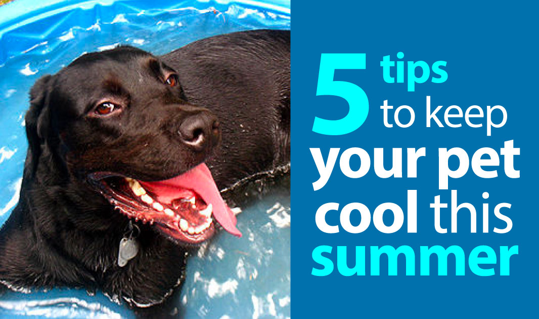 5 Tips to Keep Your Pet Cool