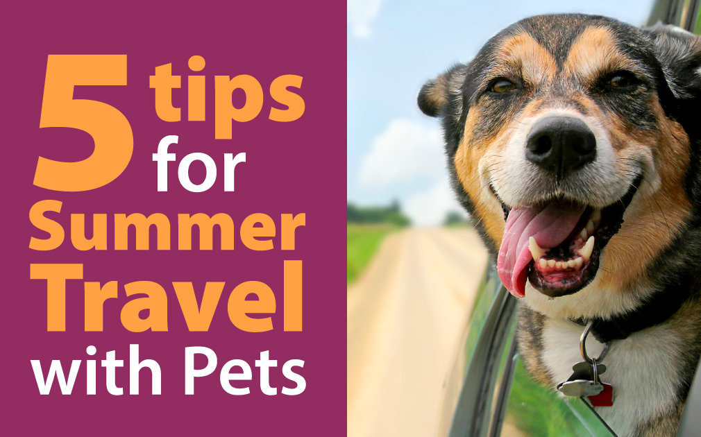 5 Tips for Summer Travel with Pets