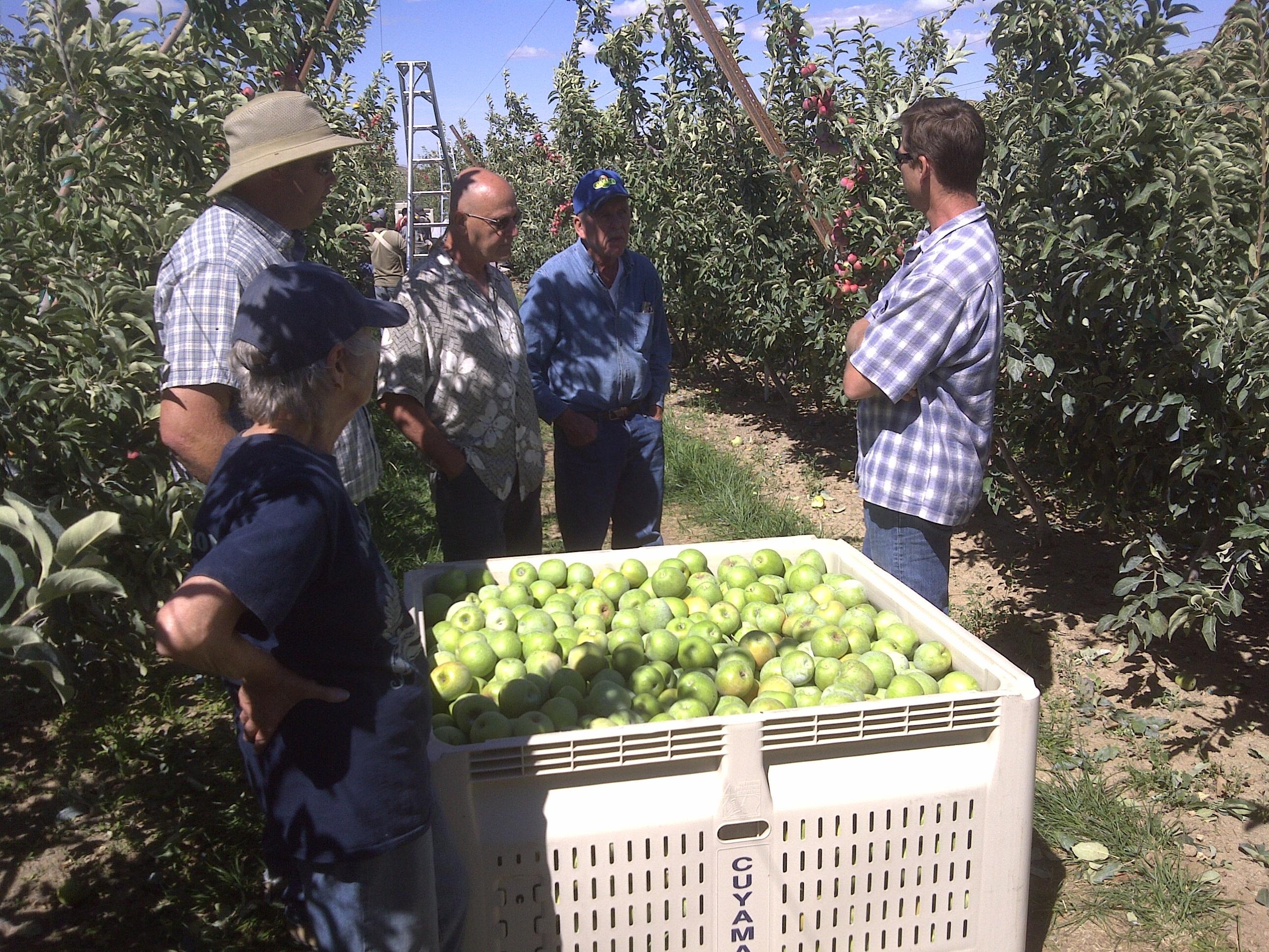 Cuyama Orchards