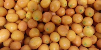 Meiwa Kumquats Round with a spicy and sweet rind and flesh