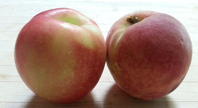 Peach and nectarine resized