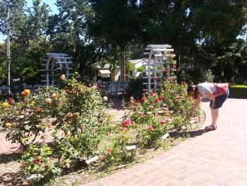 Luther Burbank Gardens in Santa Rosa, CA. Lena Bengstton in the flower garden.