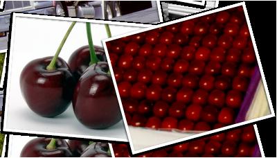 Cherry rows