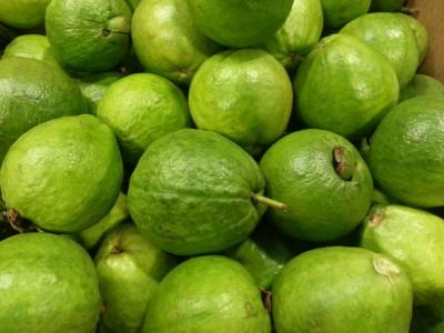 Bangkok Apple Guava (2)