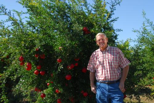 Wonderful Pomegranante Grower Paul Pafford. Fresno County, California