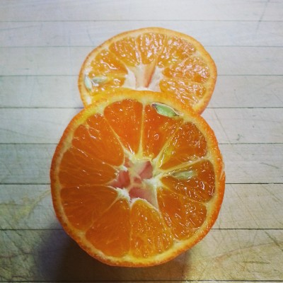 Clementine (1)