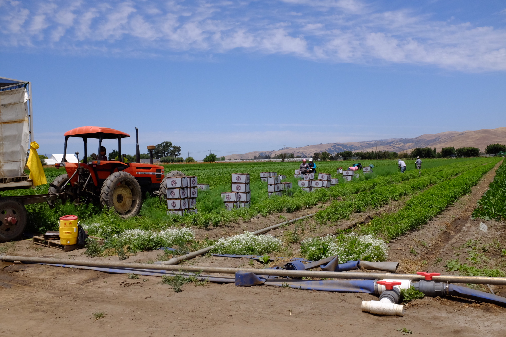 06.16.16 Las Hermanas Boxes and Tractor in Field