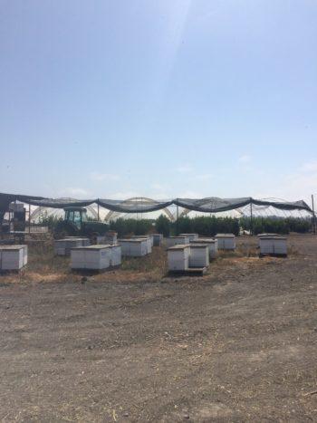 Rancho rents bee hives