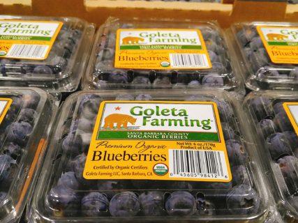 Goleta Farming Blueberries (3)