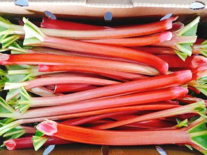 Rhubarb PNW (1)