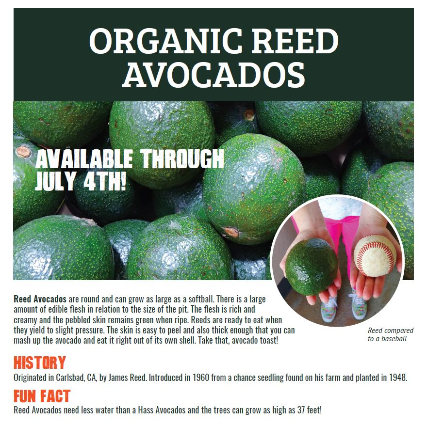 Reed Avocado flyer snippet