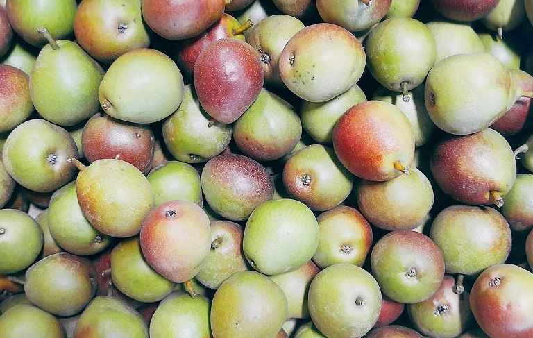Seckel Pears cropped